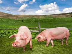 Околна среда и хуманно отношение към животните